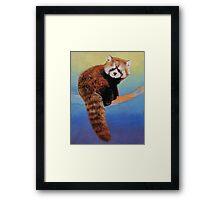 Cute Red Panda Framed Print