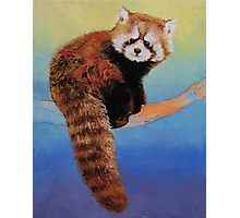Cute Red Panda Photographic Print