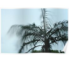 Palm in Stormy Weather Poster