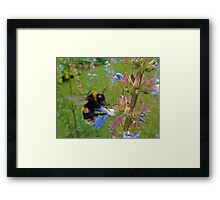 Bumble in Blue Framed Print