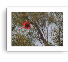 Flower MANDA Canvas Print