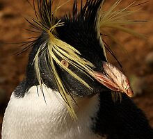 Rockhopper Penguin by Mark Hughes