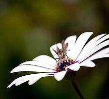 Bug on a Flower by Karen Millard