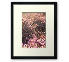 Dreamy pink blooms Framed Print