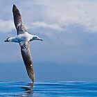 Wandering Albatross - New Zealand by Kimball Chen