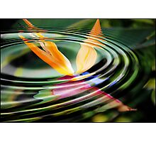 Beauty of the BOP reflection: Photographic Print