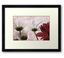 Red agains white Framed Print