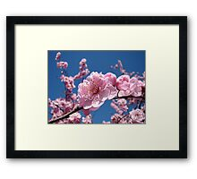 Spring Tree Pink Blossoms Blue Sky art prints Baslee Troutman Framed Print