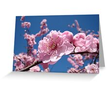 Spring Tree Pink Blossoms Blue Sky art prints Baslee Troutman Greeting Card