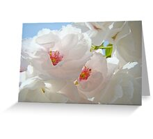 Tree Blossom Flowers White Pink Floral Baslee Troutman Greeting Card