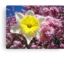 Yellow Daffodil Flower Pink Tree Blossom Baslee Troutman Canvas Print