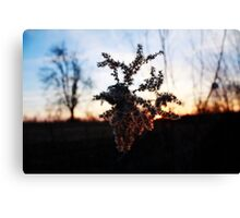barbed sunset Canvas Print
