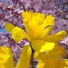 Daffodils Flowers Golden Yellow Pink Tree Blossoms Baslee Troutman by BasleeArtPrints