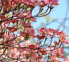 Dogwood Tree Pink Flowers Blue Sky art Baslee Troutman by BasleeArtPrints