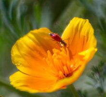 Red, Yellow, Green by Noam Gordon