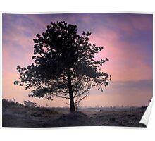 Tree in Morninglight Poster