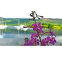 Loch Ness Flower Photographic Print