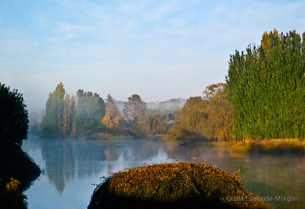 Morning at the Waterhole by Odille Esmonde-Morgan