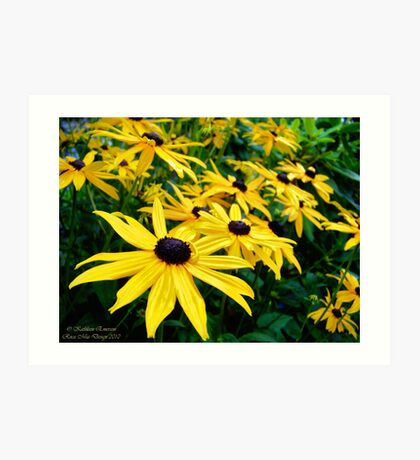 Sunshine (Black Eyed Susans) Art Print