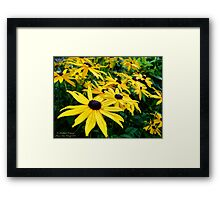 Sunshine (Black Eyed Susans) Framed Print