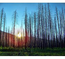 Hope - Great Northern Flats Photographic Print