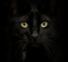 Black on Black.. by polly470