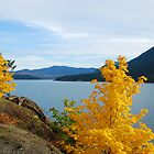 Fall Colors by Charles Hallsted