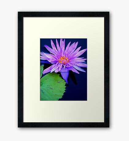 flower in the water Framed Print