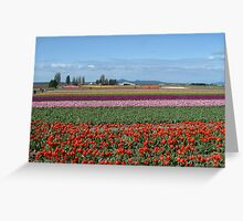 Skagit Valley tulips Greeting Card