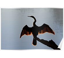 Anhinga drying wings silhouette. Poster