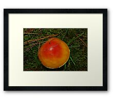 A bright find, Tasmania Framed Print