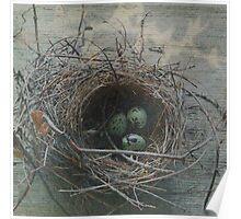 Nest Series: 1 Poster