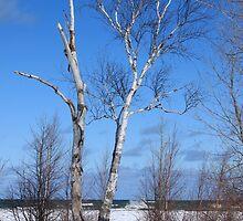 Winter Birch - Grindstone City, MI by Joy Fitzhorn
