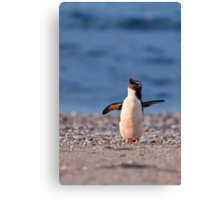 Fiordland Crested Penguin - New Zealand Canvas Print