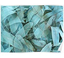Eucalypus tree leaves 1 Poster