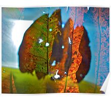 Bold leaves 1 Poster
