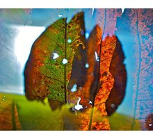 Bold leaves 1 Photographic Print