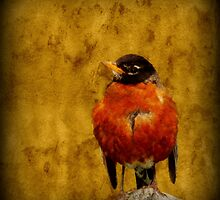 Textured Robin by Robert Miesner
