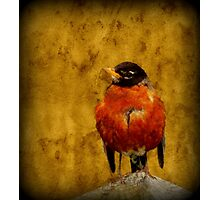 Textured Robin Photographic Print