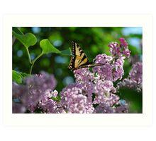 Swallowtail Enjoying the Evening Sun  Art Print