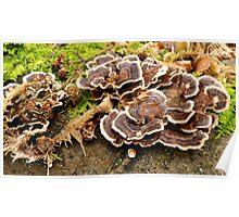 Free running Fungi Poster