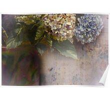 hydrangeas and that vase Poster