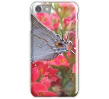 Butterfly feed nectar iPhone Case/Skin