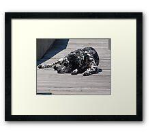 Kokomo, the Dockmaster's Dog Framed Print
