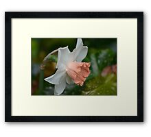 New Daffodils in the Conservatory Framed Print