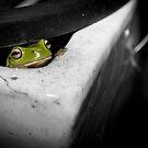 Peek-A-Boo by Craig Hender