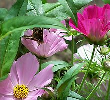 Butterfly on Flowers by rocperk