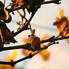 Abejita en la uva by Constanza Caiceo
