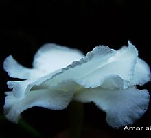 Milky flower from dark by amar singh