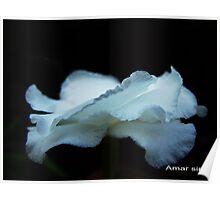 Milky flower from dark Poster
